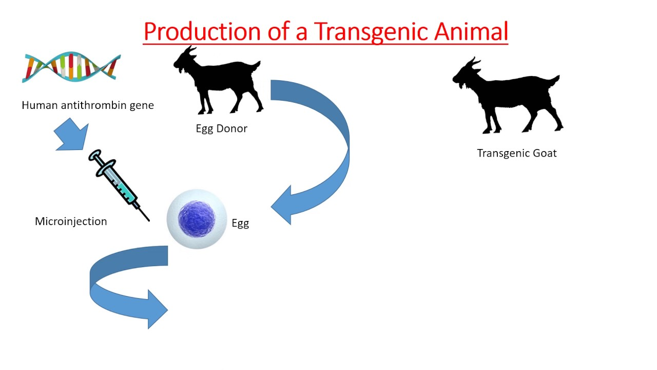 application of transgenesis in medicine