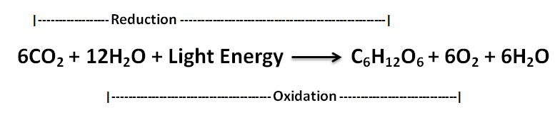 application of redox reaction in photosynthesis