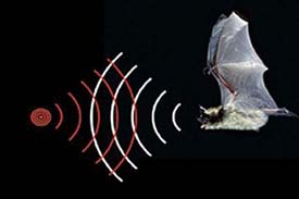 applications of ultrasonic and infrasonic sound waves