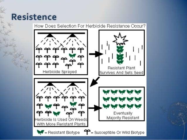 herbicide application techniques course online