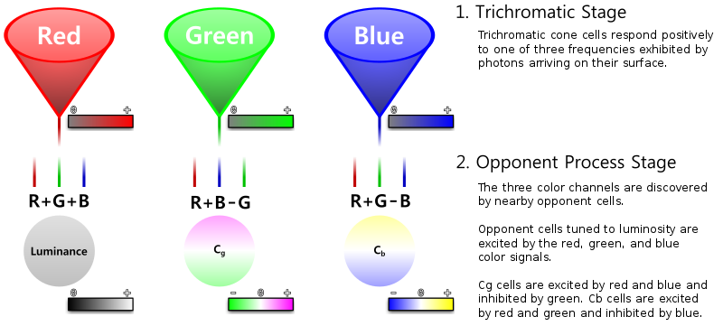 opponent-process colour theory is most applicable at the level of